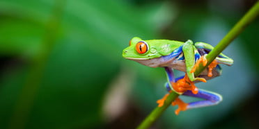 best environmental charities stock red eyed frog